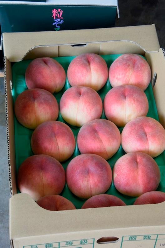 Peach_4