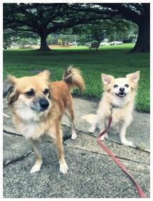 Kiki&Dino. Walks in the park.